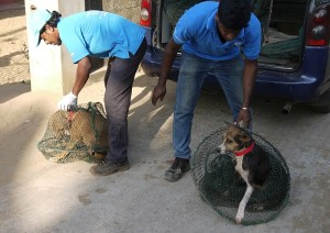 Releasing recovered dogs back to the exact spot where caught so they can resume their familiar territory.